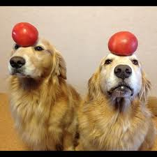 Balancing dogs