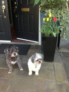 dogs at front door