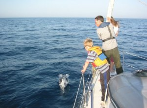 dolphin and boys in Med
