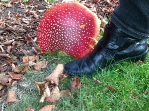 Red Mushroom 2013