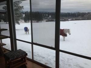 horses at Christmas