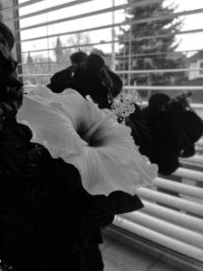 hibiscus B&W