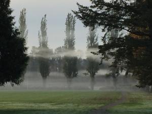 mist in park