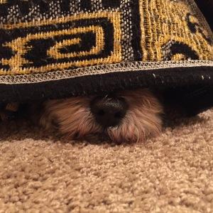 Tammy hiding