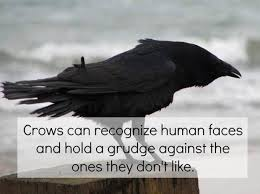 Ok, now I'm super freaked out about crows